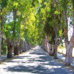 kolimbia-trees-road